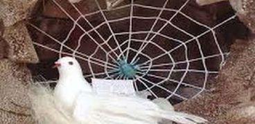 الإفتاء توضح ذكر العنكبوت والحمامتين في الهجرة النبوية