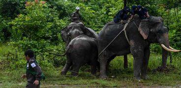 الدنمارك تحظر الأفيال في السيرك