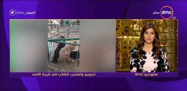 قرية الأسد