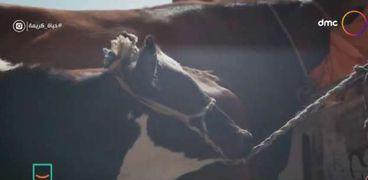 صورة من فيديو برنامج حياة كريمة