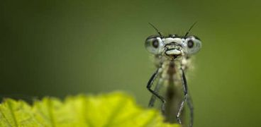 5 أشياء تجلب الحشرات إلى منزلك دون أن تعرف