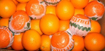 البرتقال المصري يحظى بسمعة عالمية