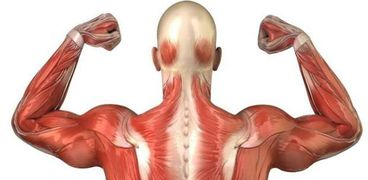 بدلا من الأطراف الصناعية.. علماء بالسويد يبتكرون عضلات صناعية