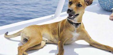 الكلب «جوجى» خلال إحدى الرحلات مع أسرة «رانيا»