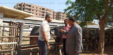 محافظ أسيوط: شراء 24 رأس جاموسي لتطوير مزرعة بني مر لإنتاج الألبان واللحوم