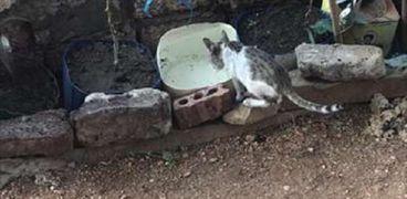 إحدى القطط التي أنقذها «فضل»