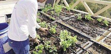 متابعة مشروع زراعة سطح وزارة البيئة
