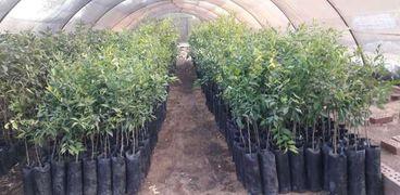 صوب زراعية بالوادي الجديد
