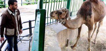 """حديقة حيوان الإسكندرية تستعين بأفراد أمن لحماية الحيوانات من """"الإيذاء"""""""