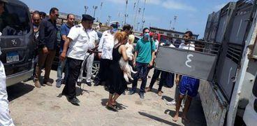 التحفظ على 8 كلاب بكورنيش الإسكندرية لمخالفتها قرار محافظ الإسكندرية