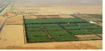 الرئيس عبد الفتاح السيسي  يعلن اطلاق مشروع الدلتا الجديده