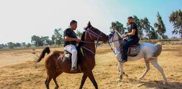 تربية الخيول في دمو