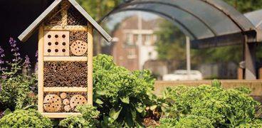"""""""فنادق الحشرات"""".. بديلا للمبيدات الحشرية للحفاظ على المحاصيل الزراعية"""
