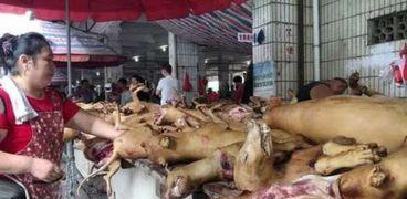 العثور على حيوانات ميتة في الصين