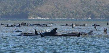 الحيتان النافقة