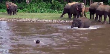 فيل يخطف الأنظار بإنقاذه فتى غريق