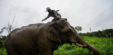 صورة سيلفي كادت تنهي حياة رجل وابنته: فيل ضخم حاول قتلهما
