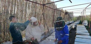 لعسل النحل قيمة غذائية كبيرة
