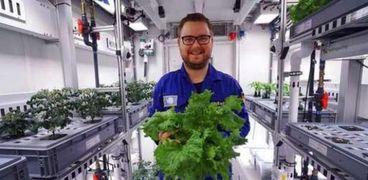 أول محصول من خضراوات مزروعة دون ضوء وتربة