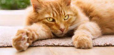 «احترس من القطط».. أصابت 40 مليون شخص في أمريكا بداء التيكسوبلازما