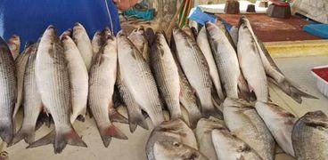 السمك في أسواق الإسماعيلية