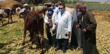 حملة تحصين الماشية في الدقهلية