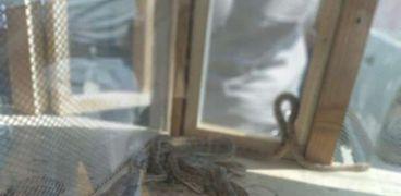 ضبط ثعابين وتماسيح داخل سوق الجمعة