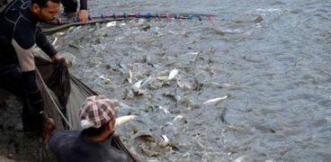 مشروع الاسترزاع السمكى.. صورة أرشيفية
