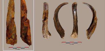 أقدم أداة خشبية صنعها الإنسان البدائي..فيما استخدمها؟