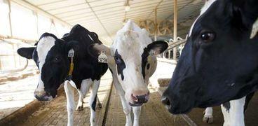"""""""بسرعة 5G"""".. تقنية جديدة لحلب الأبقار آليا في انجلترا"""