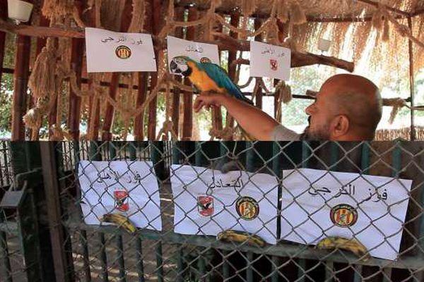 «شمبانزي وبغبغان»يتوقعان نتيجة مباراة الأهلي والترجي في دوري الأبطال