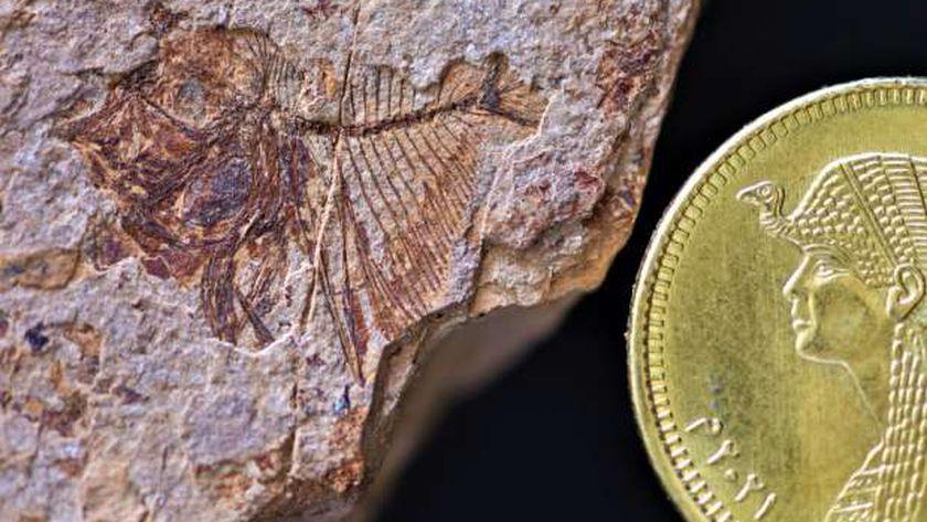 اكتشاف الحفريات في الصحراء الشرقية