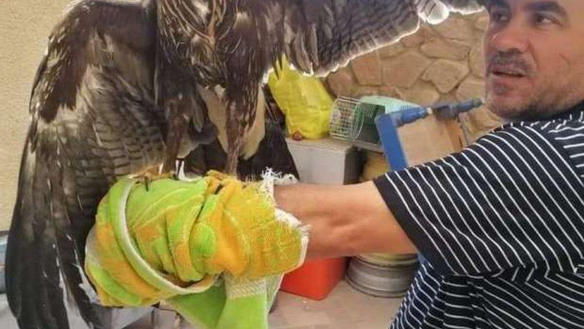 الطائر بعد إنقاذه