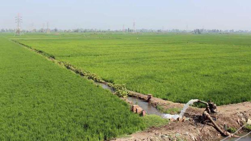 محاصيل زراعية بالوادي الجديد