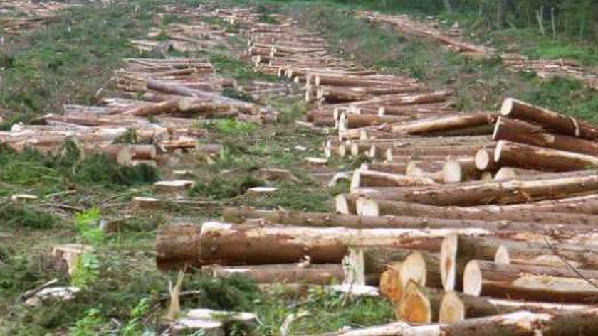 قطع الغابات