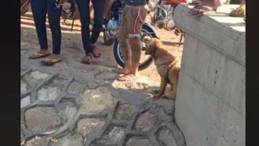 الكلب يقف في انتظار انتشال جثة صاحبه
