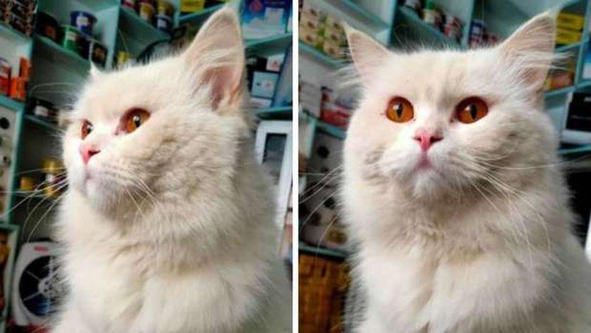 صور القط المعروض للتبني