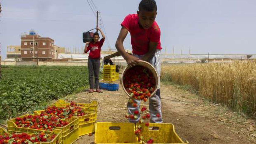 محاصيل مصر