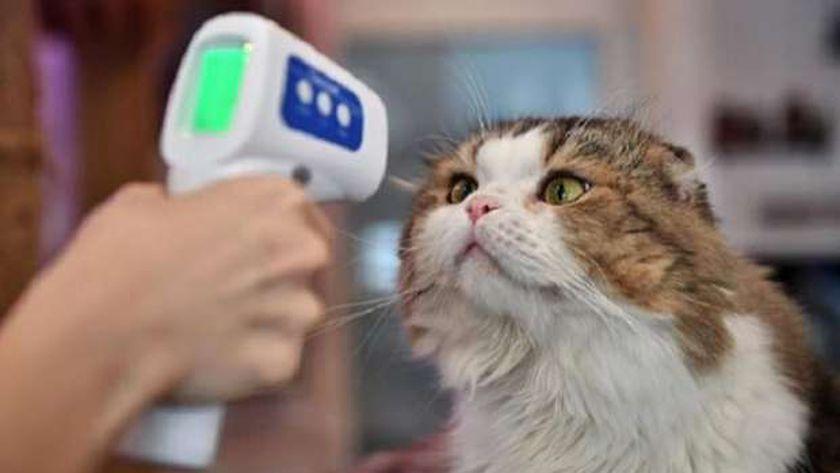 روشتة أطباء لحماية الحيوانات الأليفة من كورونا
