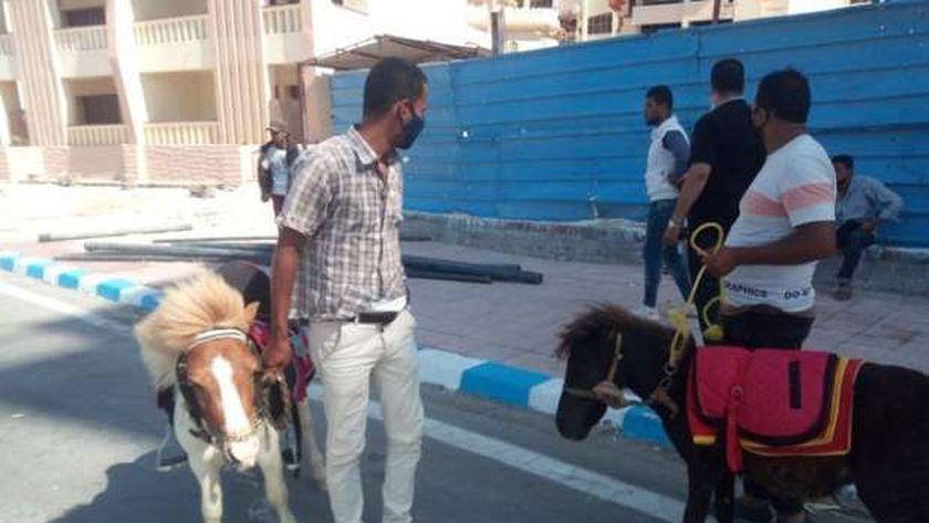ضبط خيول بمطروح