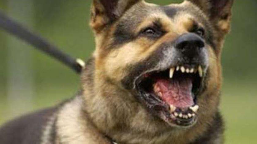 كلب مسعور يعقر 5 بينهم 4 أطفال بقرية الصوامعة بسوهاج