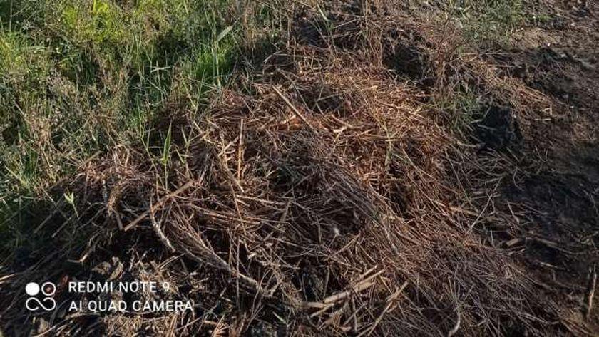 تعديات جنوب بورسعيد