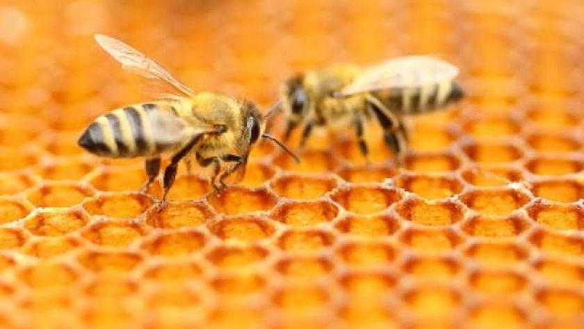 خلايا النحل
