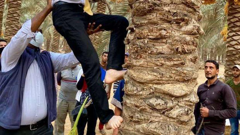 سفير اليابان يتسلق النخيل