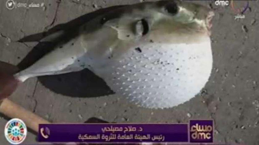 صورة تعرف على 8 أنواع من الأسماك السامة يحظر صيدها وبيعها – مصر