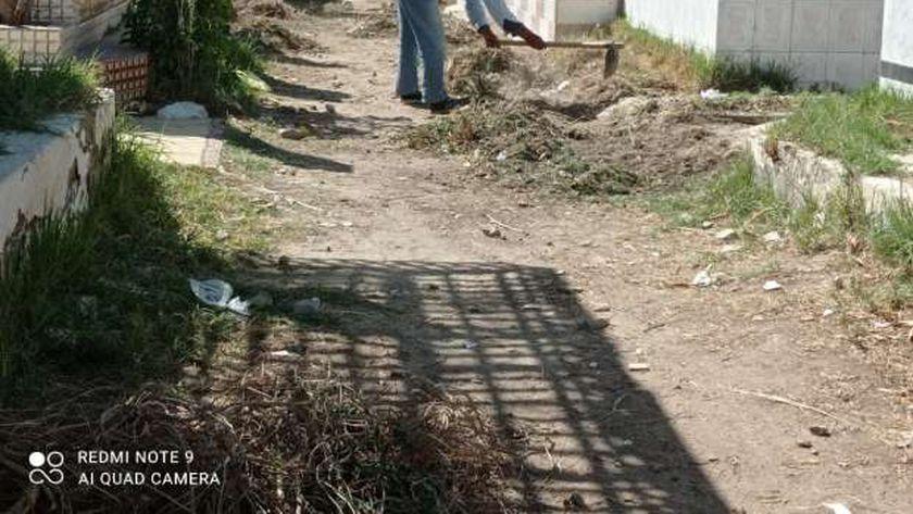 دار الإفتاء توضح حكم زراعة الأشجار في المقابر