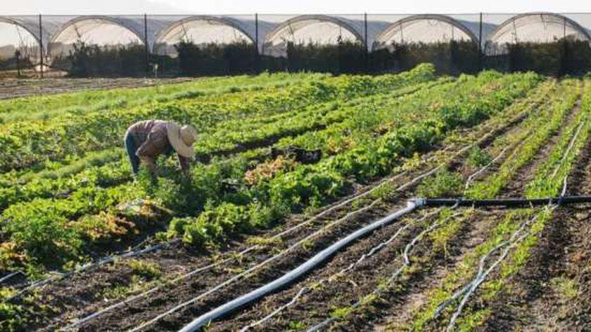 مطور زراعي: شبكة الطرق الجديدة دعمت القطاع كثيراً.. وعوائده تصل 25%