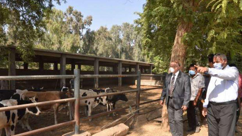 مزرعة ثروة حيوانية