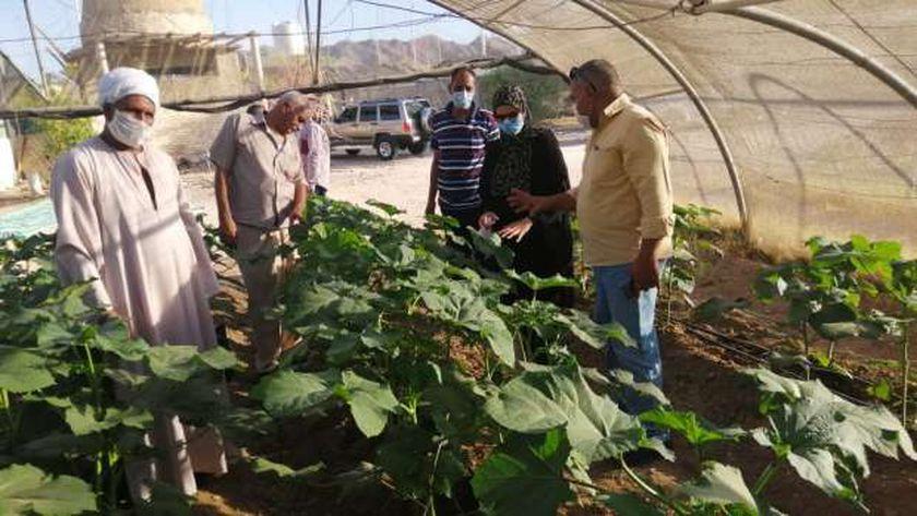 رئيس مدينة سفاجا تتفقد الصوب الزراعية