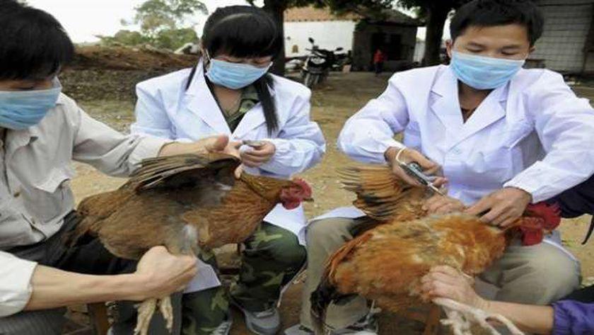 السلطات الصينية تعلن تفشى «إنفلونزا الطيور» شمال شرقي البلاد
